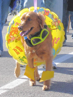 Dog wearing pool floating tube and water wings.