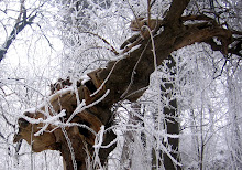 Prietenul meu: Copacul Cerb