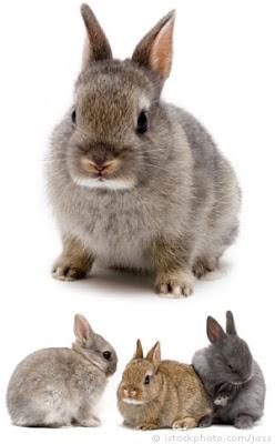 กระต่ายตัวเล็กที่สุดในโลก