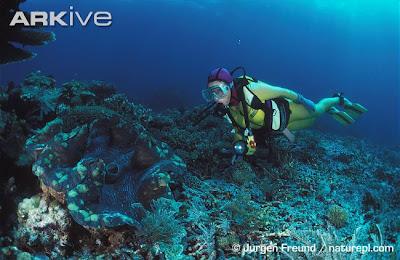 หอย ใหญ่ที่สุดในโลก
