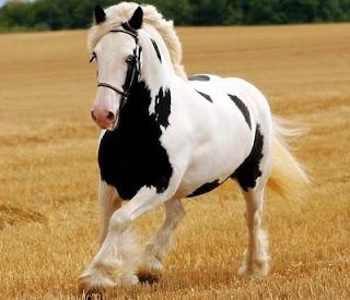 สุดยอดม้า