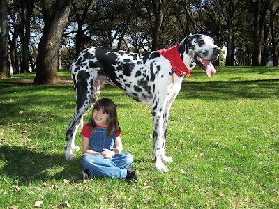 สุนัข ตัว สูงที่สุดในโลก