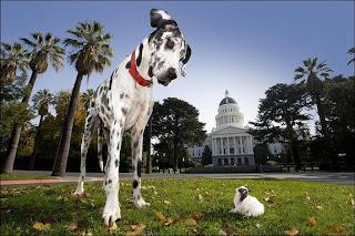 สุนัข ที่ สูงที่สุดในโลก