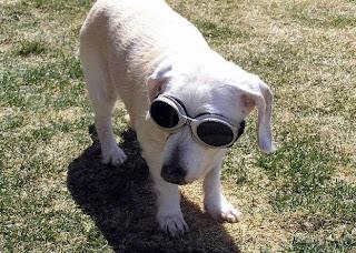 หมา อายุยืนที่สุดในโลก