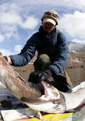 ปลา taimen ปลาแซลมอน ใหญ่ที่สุดในโลก