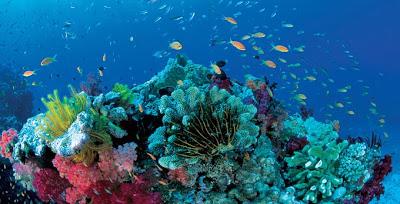 แนวปะการังยักษ์ เกรท แบริเออร์ รีฟ