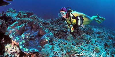 หอยมือเสือ หอยที่ใหญ่ที่สุดในโลก