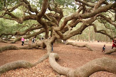 ต้นไม้ นางไม้ เทวดา