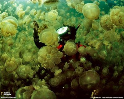 มหัศจรรย์ธรรมชาติ ทะเลสาบแมงกะพรุน ( Jellyfish Lake )