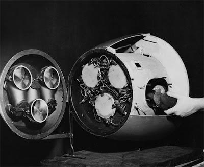 จรวดนำวิถี นกพิราบ ( Pigeon-Guided Missile)