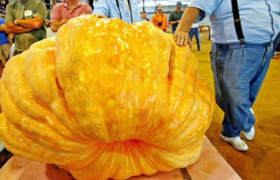 World's Largest Pumpkin (1689 Lbs or 766 Kg)