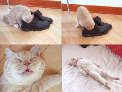 Your feet stink? Ask the cat!