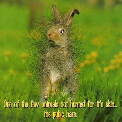 One of the few animals NOT hunted for it's skin - The 'Pubic' -hare!