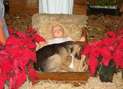 Dog in Nativity Scene