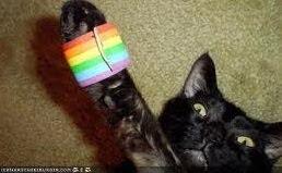 Gay Cat