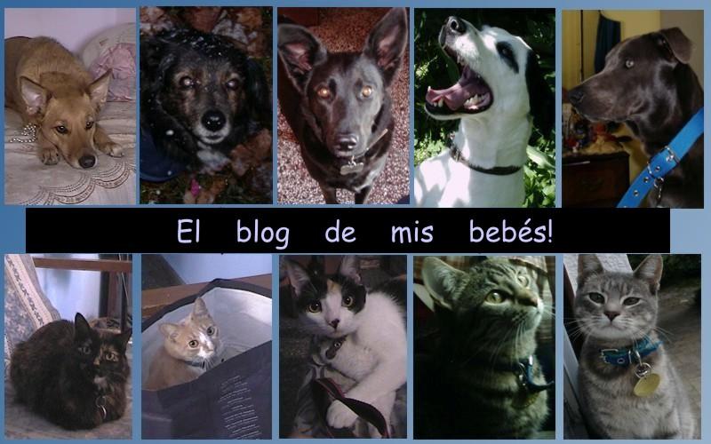 El blog de mis bebés