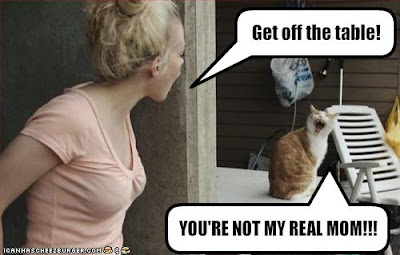 funny-pictures-cat-and-human-argue.jpg