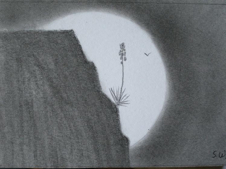 Moonlight Yucca