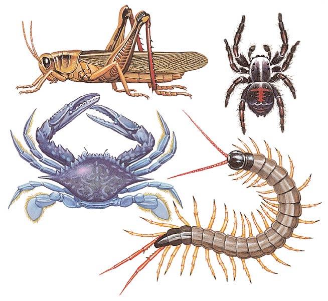 fransadhu: imagenes de animales invertebrados para imprimir