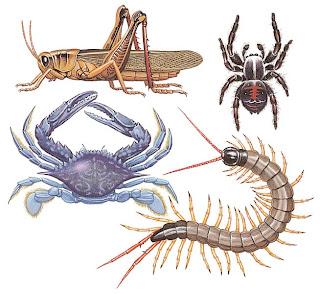 El blog de nuestra clase : Los animales invertebrados.