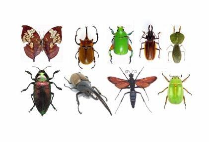 clasificacion de los animales. todos aquellos animales