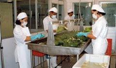 Lavado de Frutas y Hortalizas