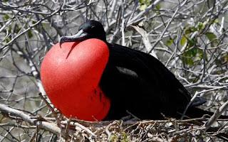 bird2_1368246c.jpg