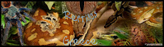 Reptiles Greece...