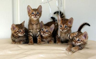 Memelihara Kucing Merupakan Sunnah Rasulullah SAW