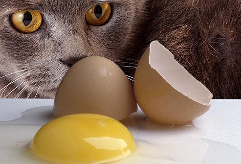 karena telur mengandung besi, protein dan sebagian besa
