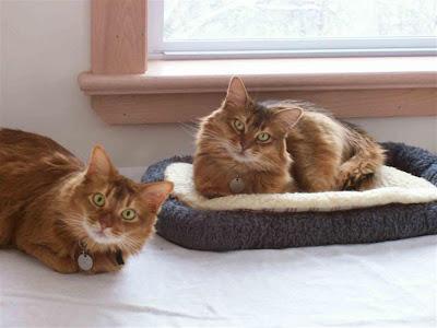 Kucing Cacing Pita Perusak Usus Kucing