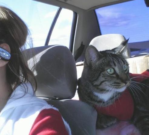 kucing dalam mobil