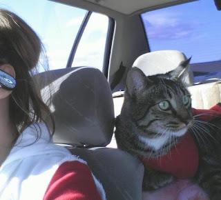 Tips Menjaga Kucing Saat Berpergian [ www.BlogApaAja.com ]