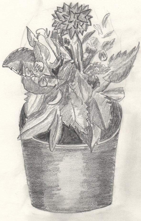 Dibujos y Pinturas Planta