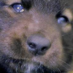 Baby Mufasa