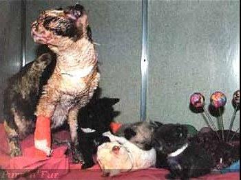 Кошатинские - Страница 5 Cat_scarlett-recovery