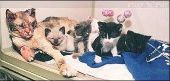 Кошатинские - Страница 5 Cat_scarlett-kits2