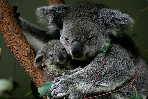 Мир в фотографиях - Страница 3 2-Time-Amazing%2BMoms-animals