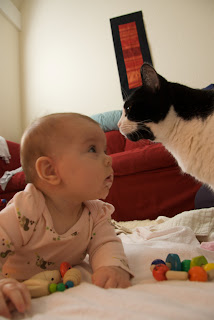 confuzing baby and cat