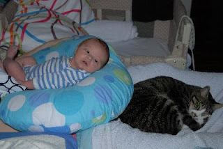 cat sleeps near the baby