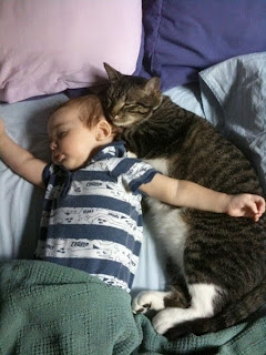 boy and cat buddy