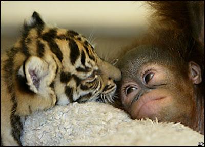 Imágenes de Animales 365 Imágenes bonitas - imagenes tiernas de animales
