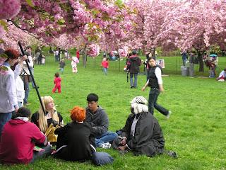 Cosplayers sitting in the grass at the Brooklyn Botanic Garden's Sakura Matsuri