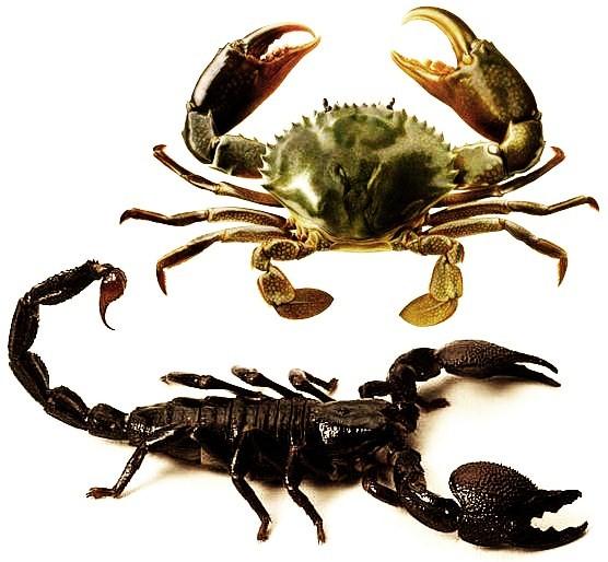 surusta selviäminen rapu ja skorpioni