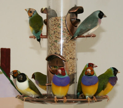 gouldian finch indoor aviary