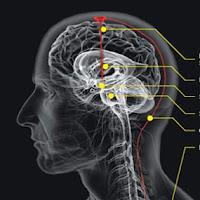 Gambar otak manusia...