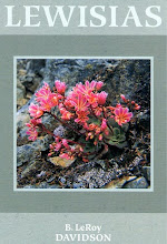 Lewisias