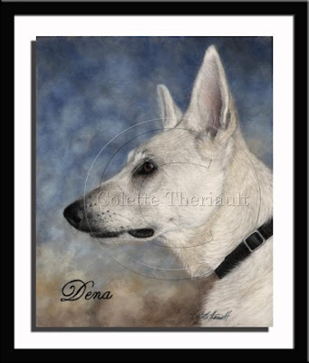 White German Shepherd Portrait in Pastel
