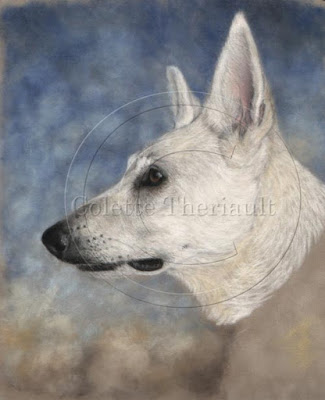 step 1 white shepherd portrait work in progress