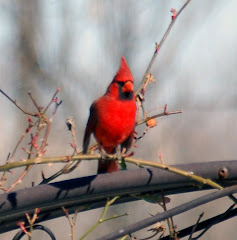 Eunice Cardinal